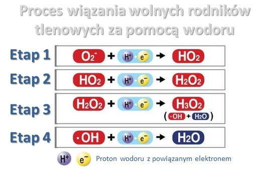 Aktywny wodór przeciwutleniacz jonizator wody